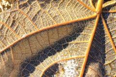 典型的秋天叶子场面 免版税库存图片