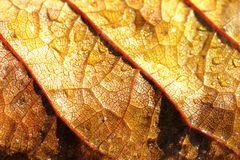 典型的秋天叶子场面 免版税图库摄影