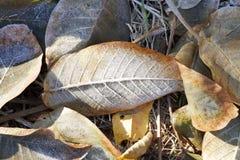 典型的秋天叶子场面 图库摄影