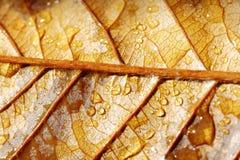 典型的秋天叶子场面 库存图片