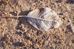 典型的秋天叶子场面 库存照片