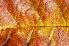 典型的秋天叶子场面 免版税库存照片