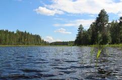 典型的芬兰自然冷杉森林临近湖 库存图片