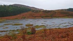 典型的苏格兰海湾在雨期间的秋天 股票视频