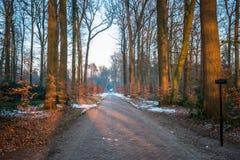 典型的荷兰冬天风景在Delden Twente,上艾瑟尔省附近的1月 库存照片