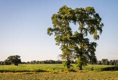 典型的荷兰夏天风景在Delden Twente,上艾瑟尔省附近的7月 免版税库存照片