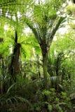 典型的雨林 免版税库存照片
