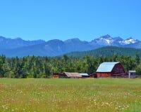 经典老红色谷仓在蒙大拿草甸 库存照片