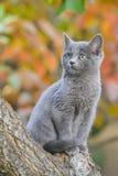 典雅的猫 秋天背景特写镜头上色常春藤叶子橙红 库存照片