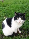典雅的猫 库存照片