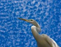 典雅的白鹭 免版税库存照片