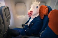典雅的衣服的奇怪的乘客坐单独在航空器里面 库存图片