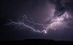 典雅的闪电树 免版税图库摄影