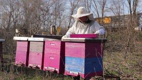 养蜂家是控制情况用补充哺养与糖蛋糕在蜂殖民地 影视素材