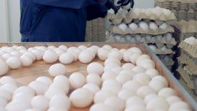 养鸡场排序鸡蛋的禽畜工作者在工厂传动机 影视素材