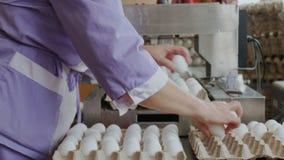 养鸡场排序鸡蛋的禽畜工作者在工厂传动机 股票视频