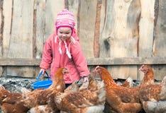 养鸡场 图库摄影