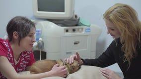 兽医和白肤金发的俏丽的说谎在桌上的妇女所有者爱抚小狗 动物治疗概念 小犬座是 影视素材