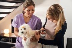 兽医教学如何使用有狗的指甲夹 库存照片