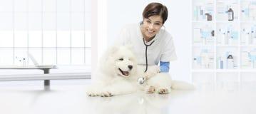 兽医考试狗,有stethoscop的微笑的兽医 库存图片