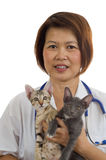 兽医2只暂挂的小猫 免版税库存图片