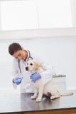 兽医做的检查在一条逗人喜爱的狗 免版税库存图片
