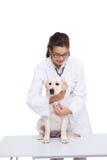 兽医做的检查在与听诊器的一条狗 免版税图库摄影
