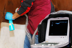 兽医做超声扫描马 图库摄影