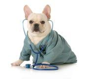 兽医关心 免版税库存照片