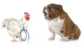 兽医关心 图库摄影