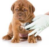 兽医关心 库存照片