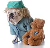兽医关心 库存图片