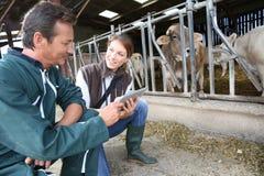 兽医和交配动物者在谷仓 免版税库存图片