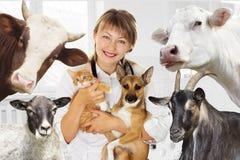 兽医和动物在诊所 库存图片