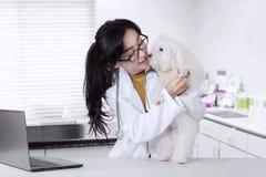 兽医检查一只狗脚 免版税图库摄影