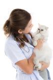 兽医检查一只猫 库存图片