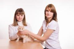 兽医检查一只红色猫 免版税库存照片
