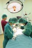 兽医医生工作运转中室的小组 库存照片