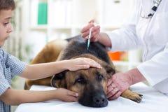 兽医给疫苗德国牧羊犬 库存照片