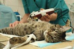 兽医的办公室,在猫的外科手术时 免版税库存图片