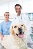 兽医的综合图象有狗的在诊所 免版税库存照片