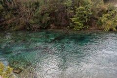 内乌肯省省的,阿根廷Lago Correntoso 免版税库存照片