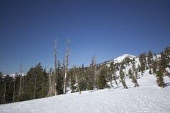 内华达山脉雪范围 免版税库存图片