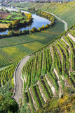 内卡河的葡萄园 库存图片