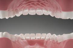 内在嘴牙 免版税库存图片