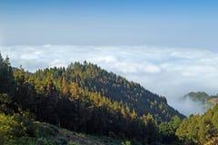 内地大加那利岛,在树的看法冠上往云层 免版税库存照片