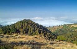 内地大加那利岛,在树的看法冠上往云层 图库摄影