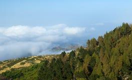 内地大加那利岛,在树的看法冠上往云层 免版税图库摄影