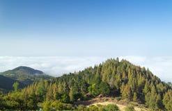 内地大加那利岛,在树的看法冠上往云层 免版税库存图片