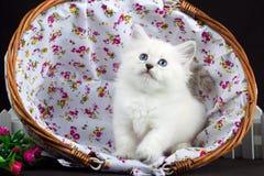 内娃在篮子的化妆舞会小猫 库存图片